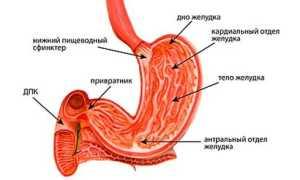 Антральный гастрит с атрофией слизистой