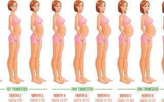 Месяц беременности какой ребенок — беременность по месяцам, что происходит с 1 по 10 месяц беременности