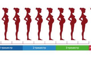 Что такое триместры при беременности