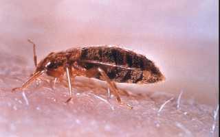 Аллергия на пыль клеща домашней пыли
