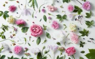 Какие цветы дарить дочери на 30 лет или каким должен быть букет для девушки в день 30-летия