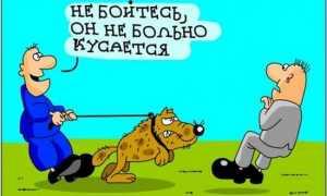 Анекдоты про собак