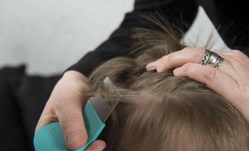 Откуда берутся вши у детей на голове: почему постоянно появляются, от чего это зависит, причины возникновения педикулеза у ребенка
