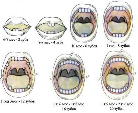 Сколько молочных зубов у детей должно быть: прорезывания и количество молочных зубов у детей